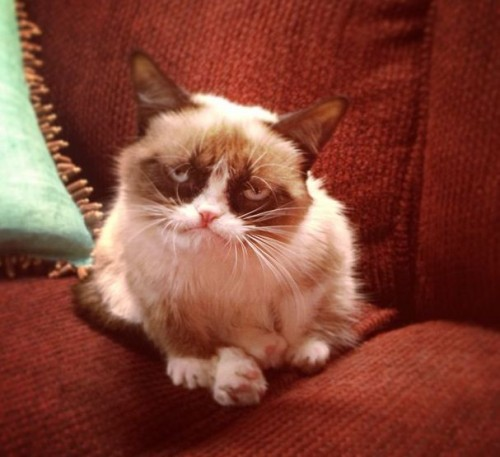 Tardar Sauce (aka Grumpy Cat) Photo by me